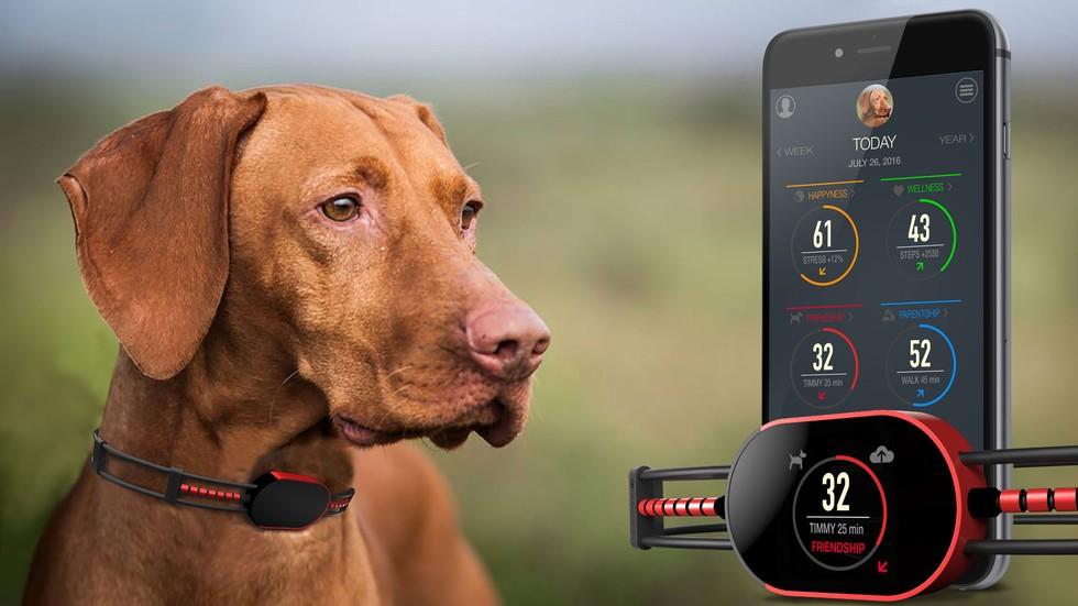 犬のためのApple Watch!?首輪型のスマートデバイス「SensDog」がクラウドファンディングで出資を募集中